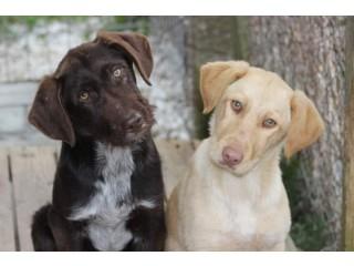 Eu caut pui de câine fetiță înspre adopție.