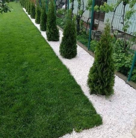 plante-ornamentale-big-0